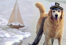 """Sea-Loving Dogs / """"A dog is the only thing on earth that loves you more than he loves himself."""" —Josh Billings"""