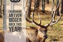 Our Favorite Hunting Quotes