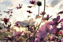 Just Love It Flowers