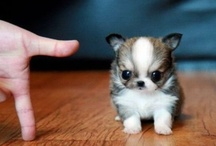 How cute is this / Most cute animal pictures you can think of