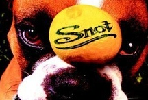 SNot **http://www.youtube.com/watch?v=wRnkUsFCu50 / sheer! Raw Poetry.