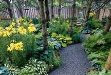 Garden Design  / by Lindy Tade