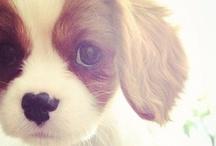 Cute Dogs / WO KANN ICH DEN KAUFEN?