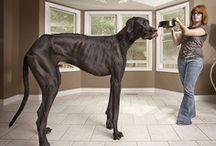 Big Dogs / Hunde für große Menschen ;-)