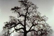 Nature: Trees