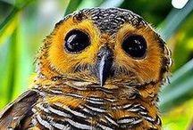 Birds / Érdekes madarak