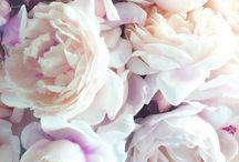 Blomster / Blomster glede