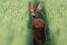Sweet Animals Photography