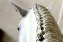 Beautiful, wonderful horses / The most wonderful creatures