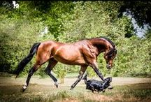 Horses & dogs / About real frendship betwen horses and dogs !!!