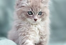 Cute Kitties / Precious cuddle-able kittens / by Sherry Pace
