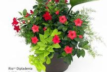 Container Gardening / Container gardening ideas and tips