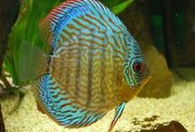 Aquariofilia / Para os amantes de peixes!