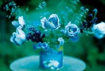 Gardens Galore / by Joanie Morgan