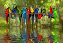 Birds Of A Feather- Flock Together / by Joanie Morgan