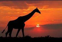 South Africa / Zambia, Botswana and Krueger National Park!