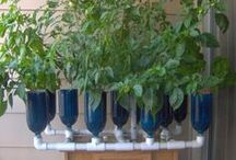 Growing Things / by Conversation Glass