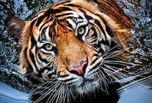 amazing photos of animals