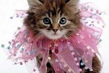 Just Getta' Cat / by Marjorie Roberts