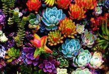 Garden Love / by Rebecca Rutledge
