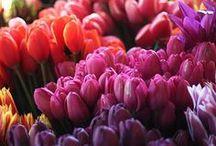 Lovely flowers ♥