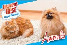 Animals / Safe for children and pets, we care about your carpet and home at Heaven's Best. Call for our carpet cleaning services today! 704-363-7487