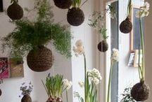 Jardinage - Gardening