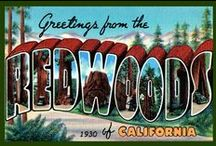 Redwood National and State Park Quilt Blocks / Vintage Redwood National and State Park images of antique postcards and posters printed on cloth for quilters. Quilt Block Sets of 4 include a free Wall Hanging Pattern.