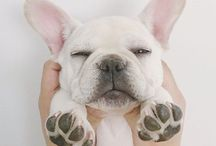uu... kooiissujaa / Tässä on nyt vähän koiria♥