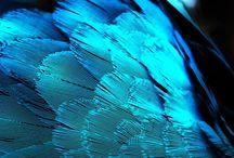 Color: Blues, Aquas, Turquoises, Periwinkles
