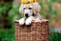 ~Baskets~