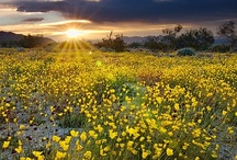 Palm Springs, Palm Desert, Indio & the Coachella Valley