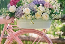 Verry pretty bikes & baskets for photography Props....