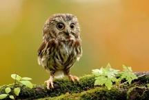 I Love Owls / by Jenny Sampson