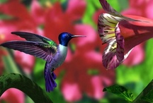 ~Hummingbirds~ / by Marla Blehm Corson