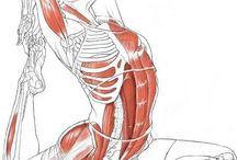 Anatomy & Exercises