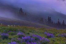Color: Lavender, Lilac, & Mauve