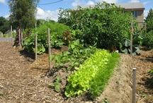 NOURRITURE : Jardinage