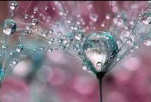 beauty of drops
