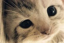 Kitties!!! / by gg202