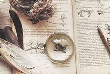 Naturalist diary