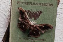 Nocturnal moths~