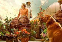 """Pushing Daisies / """"Do you think dying has made me morbid?"""" - Chuck / by Emma Smith"""