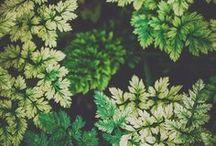 ◇ Colours ÷  Grün :: shades of green