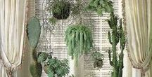 Interior ÷ WohnGrün :: indoor greenery / Living with plants. Go green inside! Beautiful succulents and cacti, potted herbs, indoor jungle spaces and fresh cuts in vases. Garden rooms and green houses.