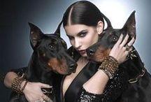 ★вᴇᴀυтy♢ᴘᴀʀтɴᴇʀs★ / ♦ BEAUTY AND THE BEAST / WITH ANIMAL's ♦