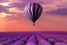Purple: Photography