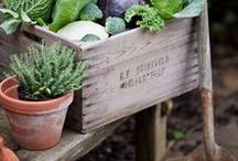 Garden ÷ GenussGarten :: delicious garden treasures / Homegrown food, vegetables, herbs and fruits from your own garden. Homesteading. DIY gardening ideas like raised beds, wooden trellis variations and inspiration for potager/kitchen gardens.