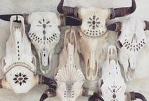 Cowskulls and taxidermy