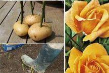 Gardens and gardening tips